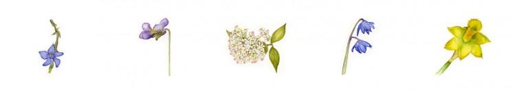 Adriana Skálová - akvarelové květiny pro stránku Vzpomínky